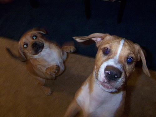 felugralo-kutyak