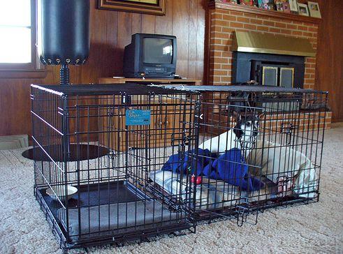 luxus, kutya, ketrec