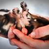Hogyan alakul ki a kutya idegrendszere?