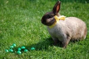 Állatbarát húsvét, élő füles nélkül!