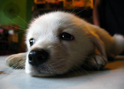 kutya, kiskutya, kutyakölyök