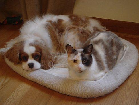 nyúl, kutya, macska