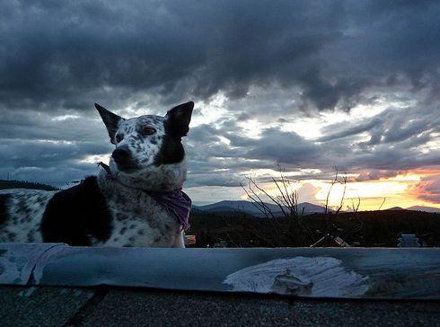kutya-viharban