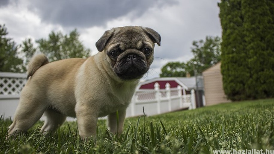 Viharfóbia és zajfóbia: hogyan készítsük fel kutyánk a következő viharra? 1. rész