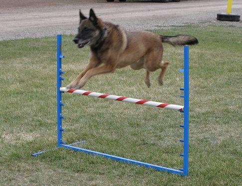 kutya, állatorvos, sport