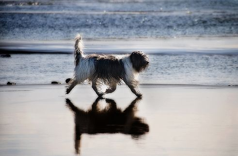 kutya, edzés, futás