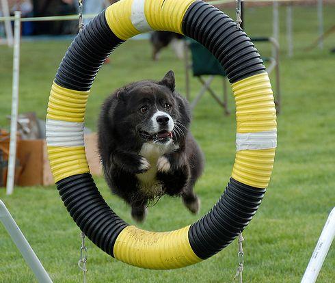 edzés, sport, kutya
