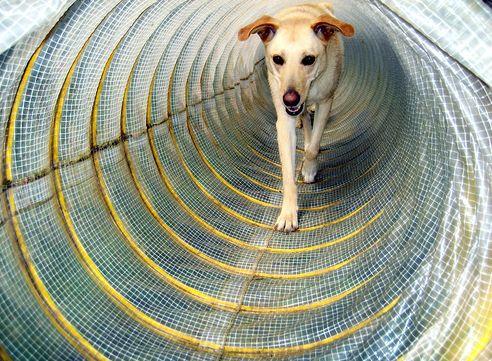 agility, kutya, edzés