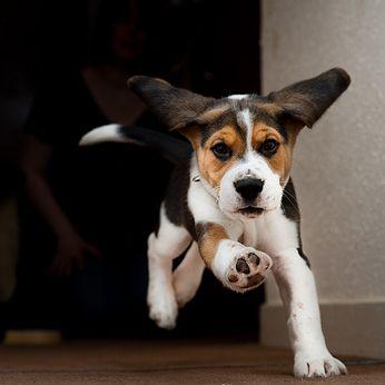 kutya, kiskutya, idomítás