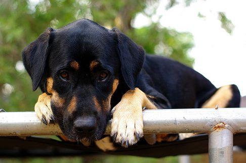 kutya, edzés, kutyás sport