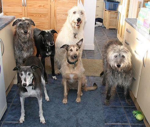 örökbefogadás, kutya, menhely