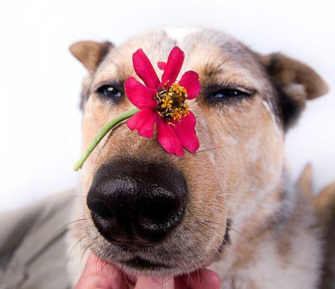 kutya, daganat, rákos