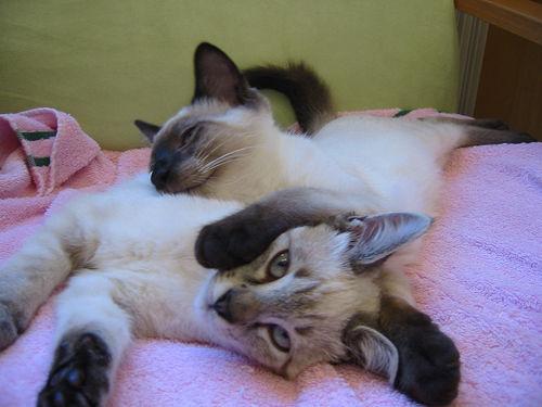 ket-cica-alszik