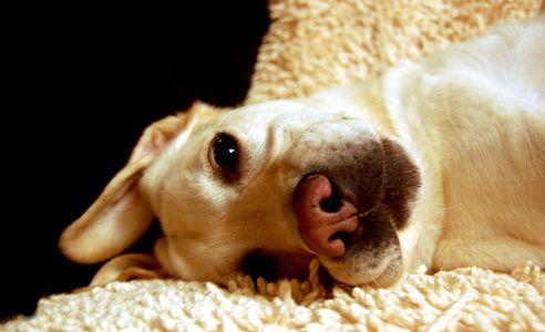 kutya, gombás, bőrbetegség