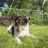 Viharfóbia és zajfóbia: hogyan készítsük fel kutyánk a következő viharra? 2. rész