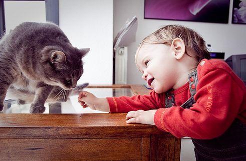 cica, baba, gyerek
