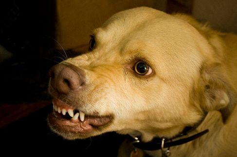 kutya, támad, harap