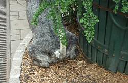 pisilo-kutya