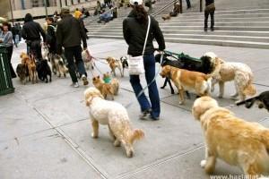 Kutyagumi: a gazdi vagy az utcaseprő szedje?