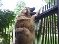 kutya, ösztön, harap