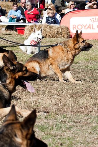 Kutyaidomítás