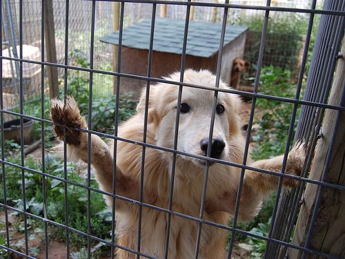 allatmenhely-kutya