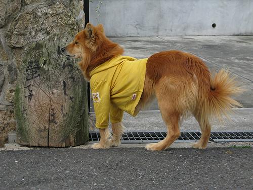 Felöltöztetett kutya