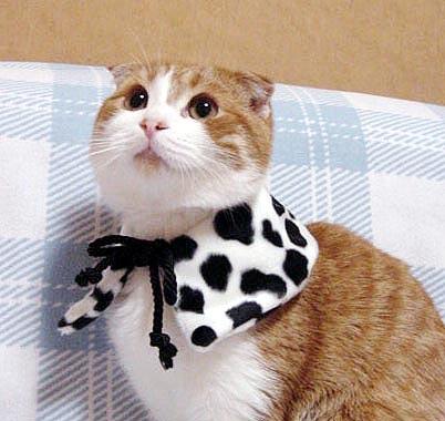 skot-cica