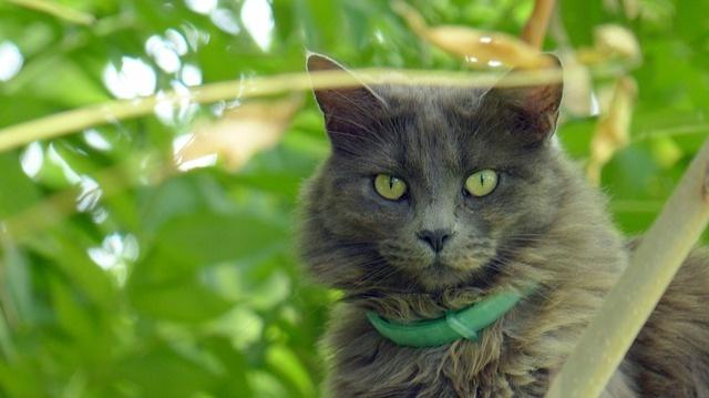 cat-975837_640