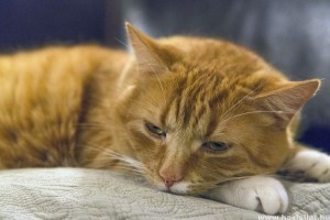 Meddig él egy macska?
