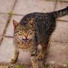 Hogyan derítsük ki a macska korát?