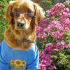 A kutyakiképzés 12 alapszabálya - 1. rész