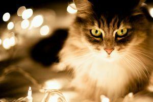 Hány macskára van szükség egy villanykörte kicseréléséhez?