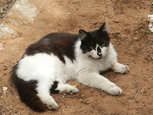 Macska a homokban