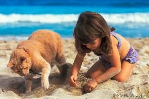 Tartsd távol a macskádat a homokozótól!