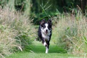 Hogyan bánjunk egy túlzottan aktív kutyával?