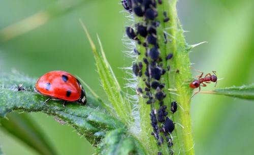 ladybug-1486479_1280