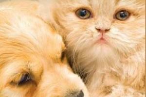 Kutyabaj és macskajaj homeopátiás kezelése (letölthető zsebkönyv)