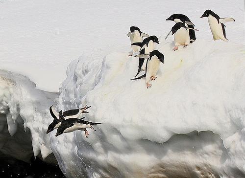 ongyilkos-pingvin