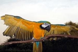 Nagy papagájok