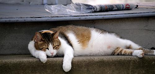 Macska heverészik