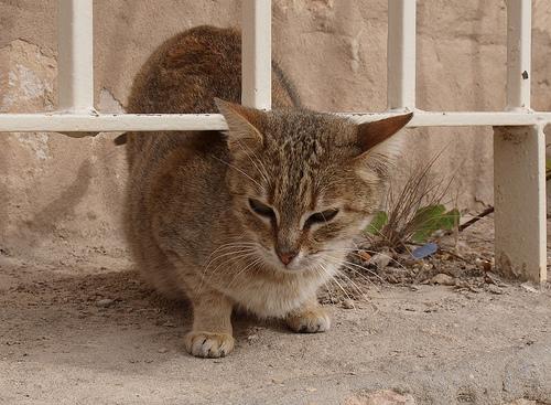 Kinti macska