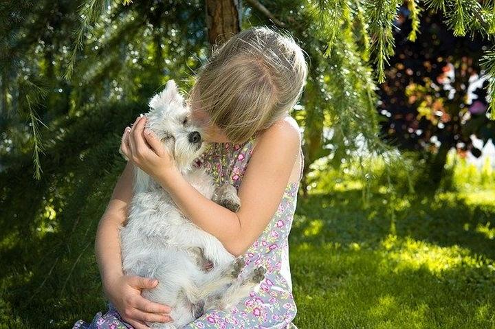 kutya_szeretet