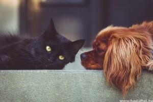 Kutya vagy macska: melyik a jobb háziállat?