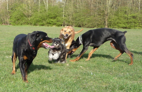 szaladgalo-kutyak