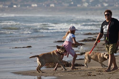 kutyak-a-tengerparton