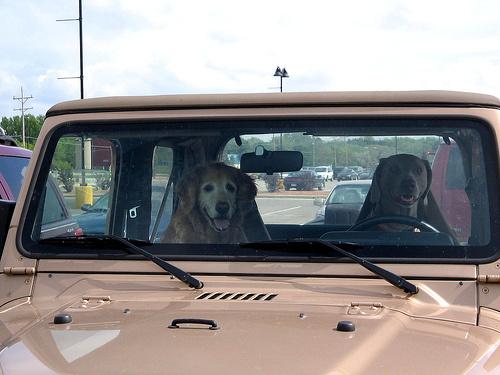 Kutya az autóban