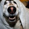 8 ok, amiért ma jobb kutyának lenni, mint 25 évvel ezelőtt