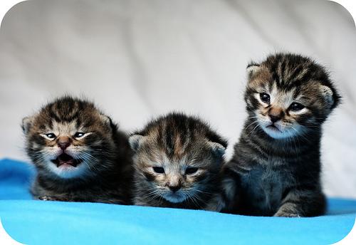 macska-ingyen