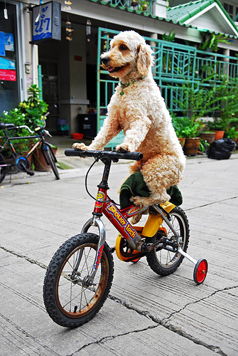 biciklizo-kutya